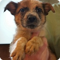 Adopt A Pet :: Rutherford - Phoenix, AZ