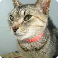 Adopt A Pet :: Egypt - Hamburg, NY
