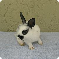 Adopt A Pet :: Kandy - Bonita, CA
