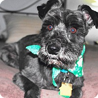 Adopt A Pet :: Coal-ADOPTION PENDING - Sharonville, OH