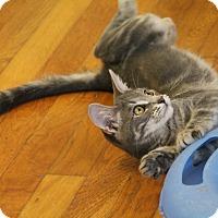 Adopt A Pet :: Albert - Knoxville, TN