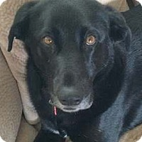 Adopt A Pet :: Polly - Broomfield, CO