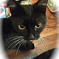 Adopt A Pet :: Luna - Mount Laurel, NJ