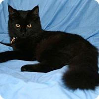 Adopt A Pet :: Pepe - Addison, IL