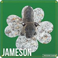 Adopt A Pet :: Jameson - Groveland, FL
