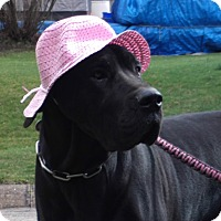 Adopt A Pet :: Sophy - Baden, PA