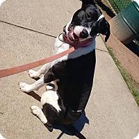 Adopt A Pet :: Cady - Atlanta, GA