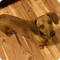 Adopt A Pet :: Quincy number 3 in TN - Columbia, TN