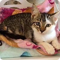 Adopt A Pet :: Luna - Greenwood, SC