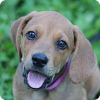 Adopt A Pet :: Austin - ADOPTION IN PROGRESS - Bedminster, NJ