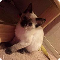 Adopt A Pet :: Birdie - Dallas, TX