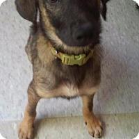 Adopt A Pet :: Lincoln - Grand Rapids, MI