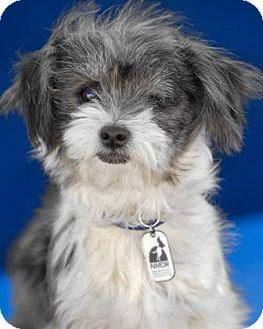 Terrier (Unknown Type, Small) Mix Dog for adoption in Colorado Springs, Colorado - Bijou