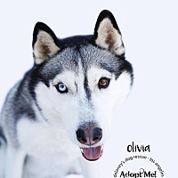 Adopt A Pet :: OLIVIA - Los Angeles, CA