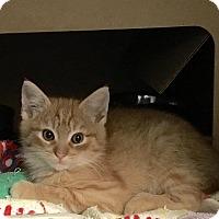 Adopt A Pet :: Brick - East Brunswick, NJ