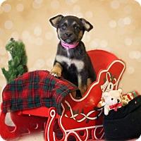 Adopt A Pet :: Franny - Waldorf, MD