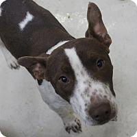 Adopt A Pet :: A09 Peanut - Odessa, TX