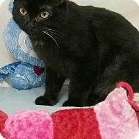 Adopt A Pet :: Cinder - Kendallville, IN