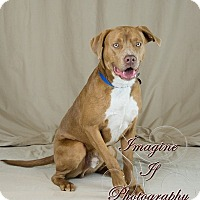Adopt A Pet :: Prince - Newcastle, OK
