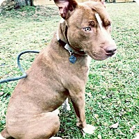Adopt A Pet :: Scooby - Brunswick, OH