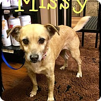 Adopt A Pet :: Missy - WESTMINSTER, MD