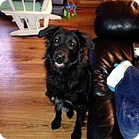 Adopt A Pet :: Blaze - Northumberland, ON