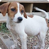 Adopt A Pet :: Obie - Austin, AR