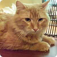 Adopt A Pet :: Quentin (Queso) - Ennis, TX
