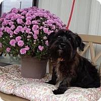 Adopt A Pet :: Beans - Brattleboro, VT