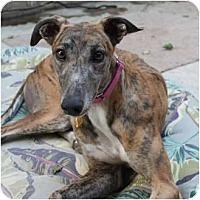 Adopt A Pet :: Reese - Philadelphia, PA