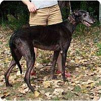 Adopt A Pet :: Simba (Simba Umgowah) - Chagrin Falls, OH