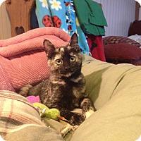 Adopt A Pet :: Lacey - St. Louis, MO