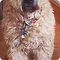 Adopt A Pet :: Colby in MA - North Kansas City, MO