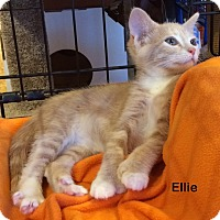 Adopt A Pet :: Ellie - Portland, OR