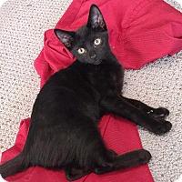 Adopt A Pet :: Eenie - Berkeley Hts, NJ