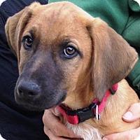 Adopt A Pet :: Bowen - Pleasant Plain, OH