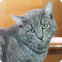 Adopt A Pet :: Newman - Brimfield, MA