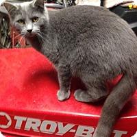Adopt A Pet :: Captain - Elyria, OH
