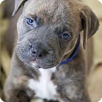 Adopt A Pet :: Sloane - Miami, FL