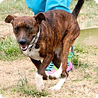 Adopt A Pet :: Casey (has been adopted) - Rochester, NY