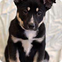 Adopt A Pet :: Maddox - Waldorf, MD