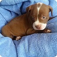 Adopt A Pet :: Sparky - Windermere, FL