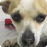 Adopt A Pet :: Winnipeg - Lincolnton, NC