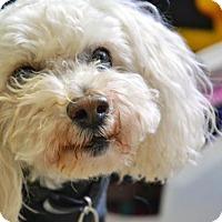 Adopt A Pet :: Gomez - Los Angeles, CA
