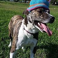 Terrier (Unknown Type, Medium) Mix Dog for adoption in Simsbury, Connecticut - Sasha