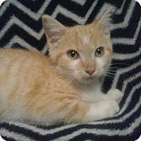 Adopt A Pet :: Daylee - Crocker, MO