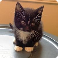 Adopt A Pet :: Harmony - Lebanon, PA