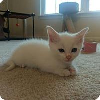 Adopt A Pet :: Isa - Herndon, VA