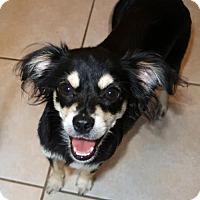 Adopt A Pet :: Trixie - Burbank, OH