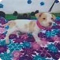 Adopt A Pet :: Kylie - Aurora, CO